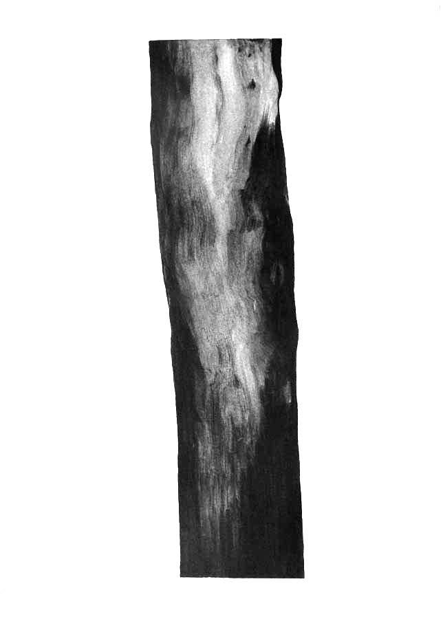 Arbre, graphite sur papier, ht 36 x 26 cm