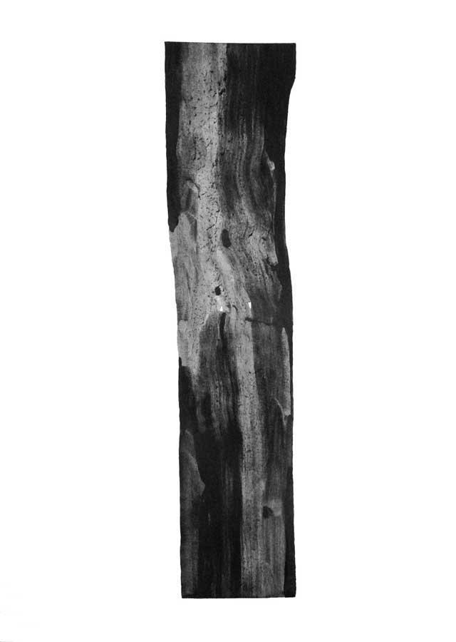 Arbre, graphite sur papier, ht 51 x 36 cm