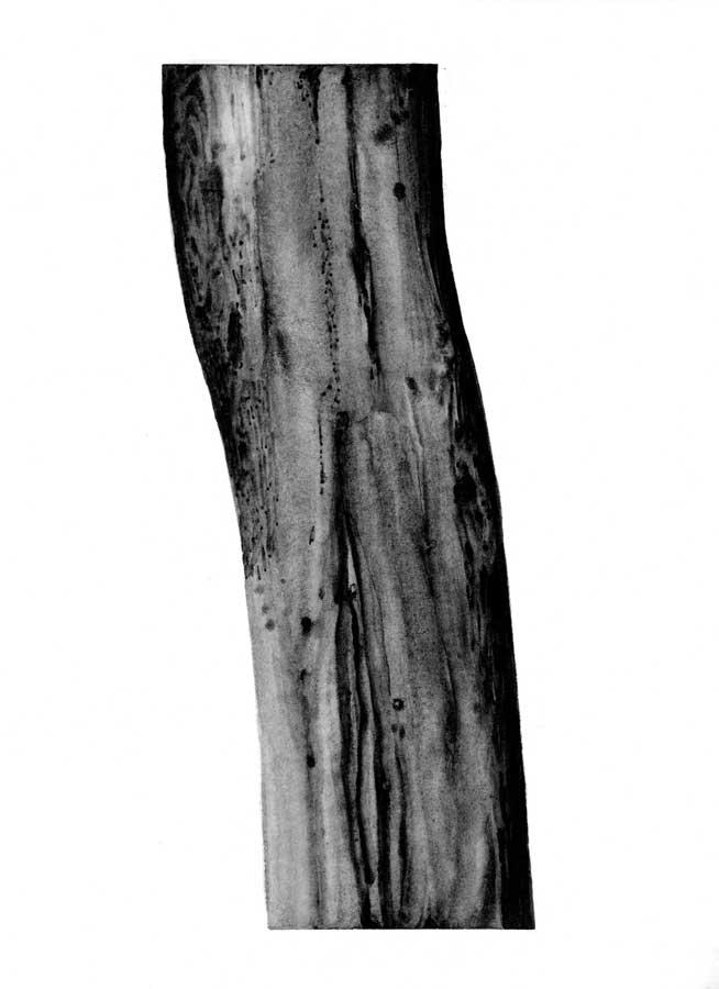 Arbre, graphite sur papier, ht 30 x 30 cm
